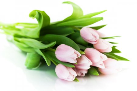 Как выбрать качественные тюльпаны?